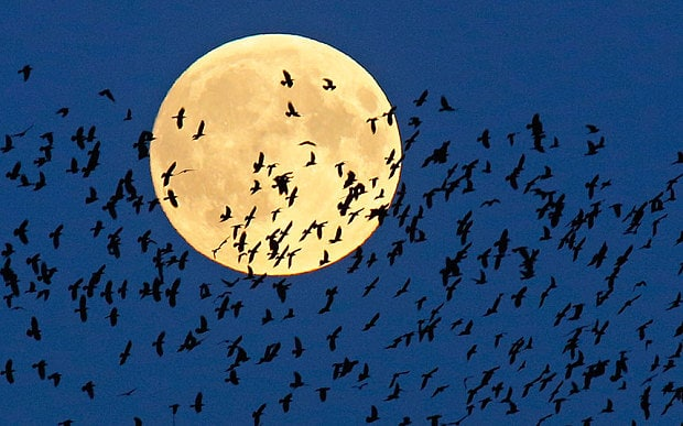 supermoon_birds_3455359b